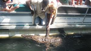 Black River Safari Tours St. Elisabeth Jamaica