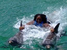 Dolphin Cove Tours Ocho Rios Jamaica